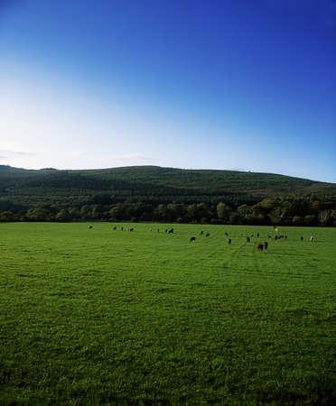 Pastoral, Kilsheelan, Co Tipperary, Ireland