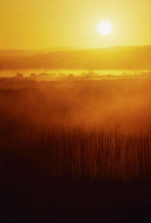 Sunrise, near Bunratty Castle, Co Clare, Ireland Stock Photo - 8242662