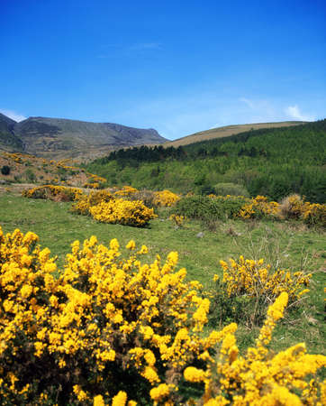 Co Waterford, Comeragh Mountains, near Crottys Rock, Ireland Stock Photo - 8243703