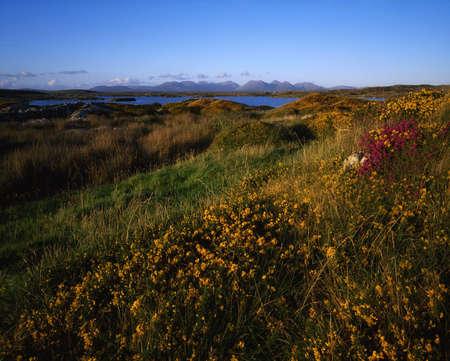 bens: Wildflowers, Twelve Pins, Connemara, Co Galway, Ireland Stock Photo