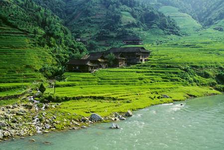 Rice fields, Longsheng, Guangxi province, China