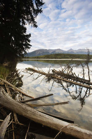 arboles secos: �rboles muertos en un lago  Foto de archivo