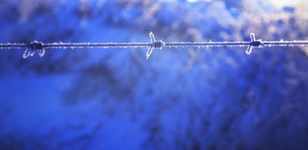 Frost on barbed wire Stock Photo - 8241522