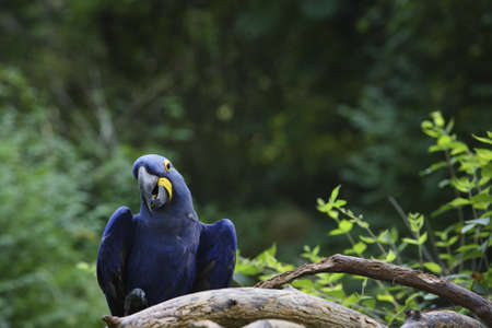 feathered: A blue parrot