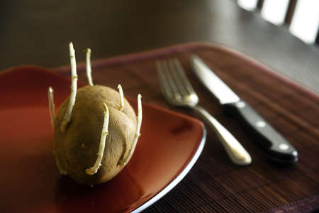 russet potato: Old sprouting potato on plate