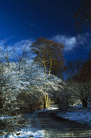 Hoars frost on trees in Longshaw Estate, Derbyshire, England photo