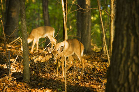 Baby deer in forest Stock Photo