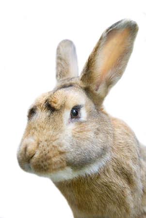 knorr: Rabbit