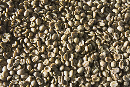unroasted: Green unroasted coffee beans Stock Photo