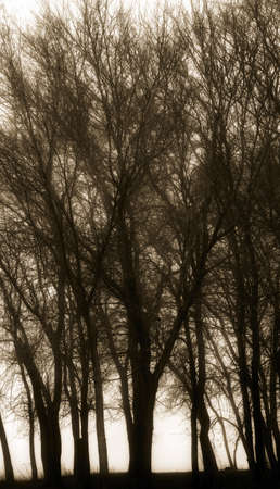 knorr: Silhouette of trees