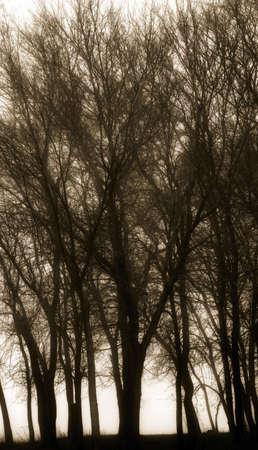 sepias: Silhouette of trees