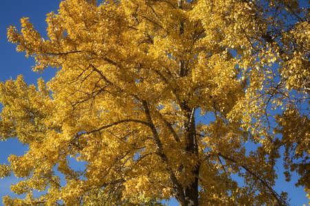 tanasiuk: Fall foliage