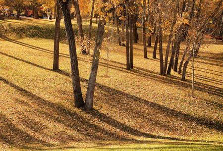 가을의 나무