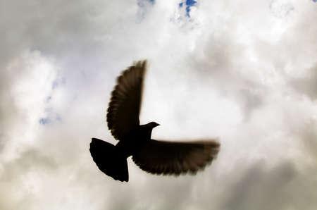 flight: Bird in flight