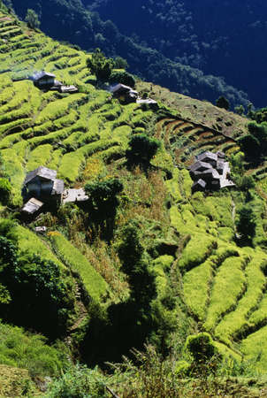 Terraced Fields, Annapurna Region, Nepal Stock Photo
