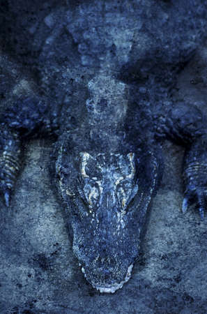 knorr: Crocodile