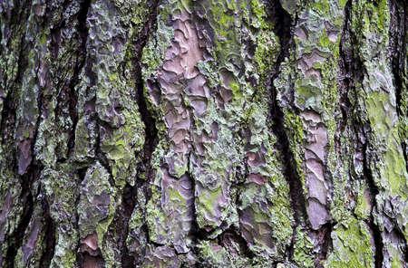 fullframes: Close up of tree bark