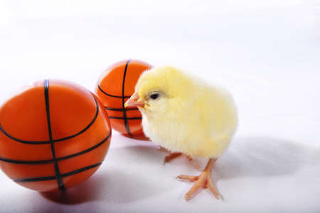 Chick with basketballs photo