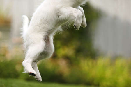 animal body part: Dog jumps