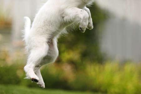 jubilation: Dog jumps