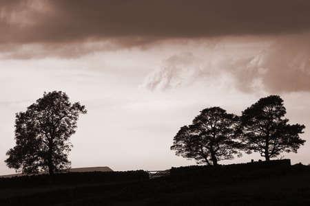 sepias: Tree silhouette,Derbyshire,England