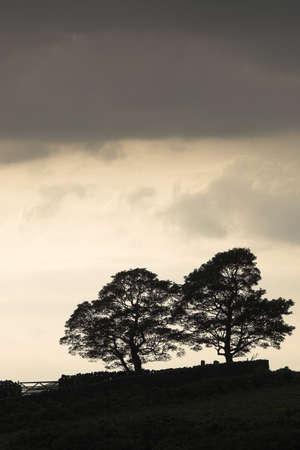 Tree silhouette,Derbyshire,England photo