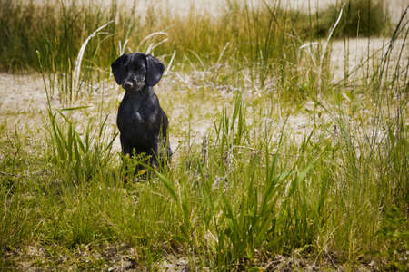 steve nagy: A dog sitting in tall grass Stock Photo