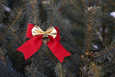 Bow on an evergreen tree Stock Photo - 8242717