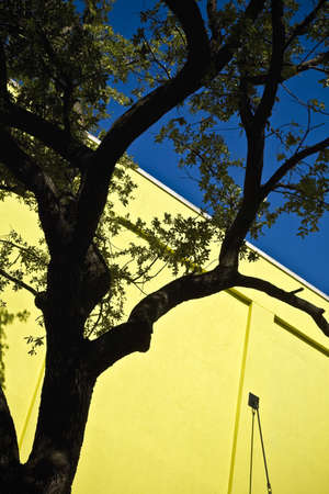 A tree and a yellow wall Stock Photo - 8243585