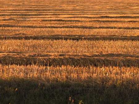 fullframes: Farmers field Stock Photo