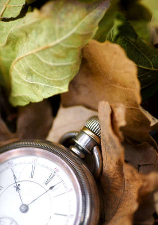 timepieces: Pocket watch on leaves