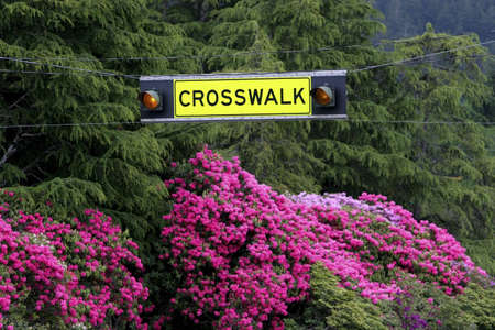 colleen: Crosswalk sign