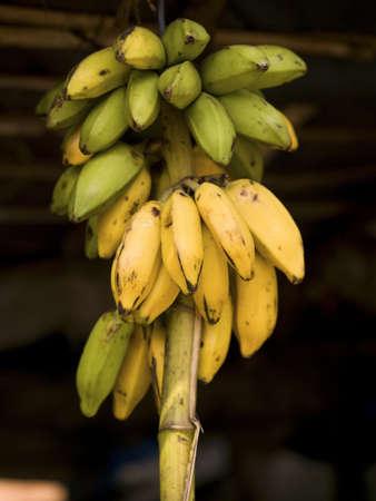 Bananas, Kerala, India   photo