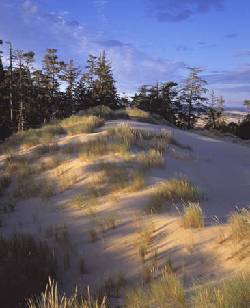 natural selection: Wind swept sand and grass on sand dunes