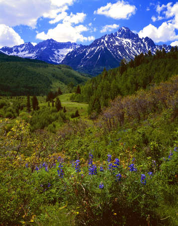 Wildflowers, Mount Sneffels, Uncompaghre National Forest Stock Photo - 8245352