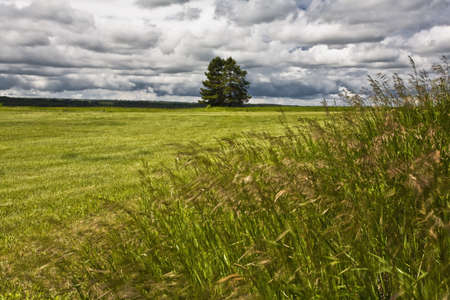 Two trees in a field Stock Photo - 8245432