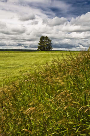 Two trees in a field Stock Photo - 8245433