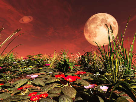 surreal landscape: Amazing flowers on exoplanet. Exoplanet Exploration - Fantasy and Surreal Landscape. 3D rendering Stock Photo