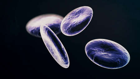 Lymphocyte white blood cells