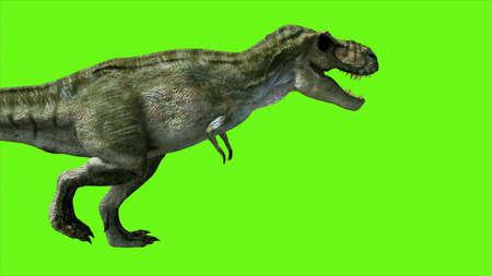 T Rex Tyrannosaur Dinosaur on green screen.