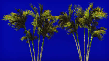 Palm trees in the wind on blue screen. Beautiful summer background. 3D Rendering