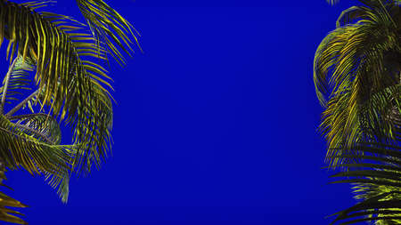 The branches of palm tree in the wind on blue screen. Beautiful summer background. 3D Rendering Stock fotó