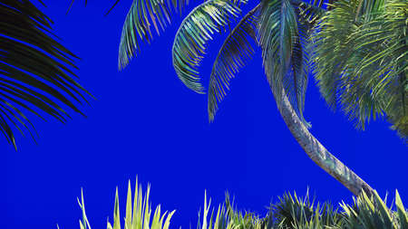 Branches of a palm tree and a tropical plant in the wind on a blue screen. Beautiful summer background. 3D Rendering