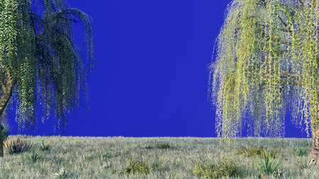 Branches with green leaves of weeping willow and leaves fluttering in the wind in front of a blue screen. Imagens