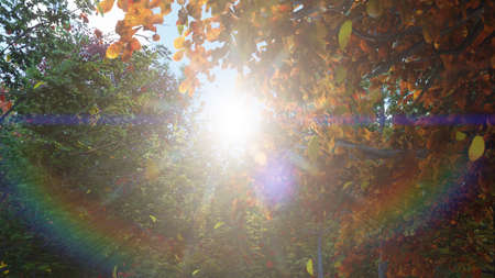Autumn leaves fall from trees in autumn Park. Autumn colorful Park on a Sunny day. 3D Rendering Фото со стока