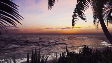 Branches of palm trees and tropical plants in the wind at sunset. 3D Rendering Фото со стока - 126583273