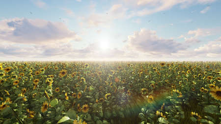 Beautiful Sunflowers in the field at sunrise. Field with sunflowers, butterflies and insects. 3D Rendering Фото со стока - 126583277