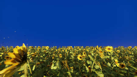 Beautiful Sunflowers in the field at sunrise. Field with sunflowers, butterflies and insects in front of a blue screen. 3D Rendering Фото со стока