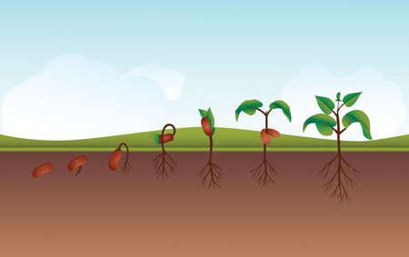 kezdetek: Seeding Growing process vector illustration