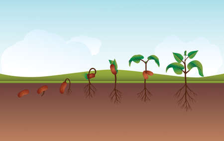 potting soil: Seeding Growing process vector illustration